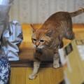 写真: 2011年10月31日のボクチン(7歳)
