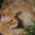 写真: 2009年11月08日の茶トラのボクちん(5歳)