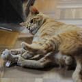 写真: 2009年11月16日の茶トラのボクちん(5歳)