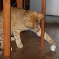 写真: 2008年11月18日のボクチン(4歳)