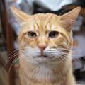 写真: 2010年11月18日のボクチン(6歳)