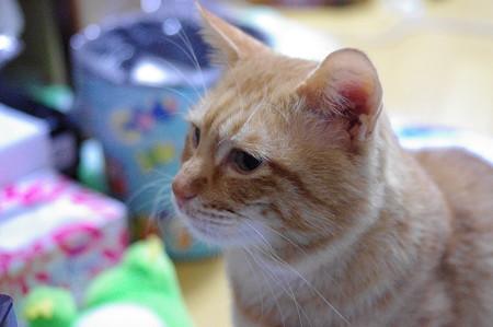2009年12月10日の茶トラのボクちん(5歳)