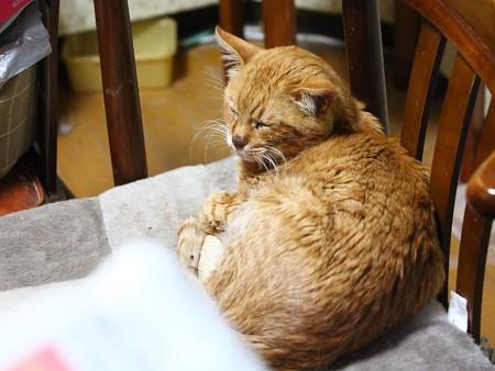 2012年01月03日の茶トラのボクちん(7歳)