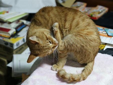 2010年01月07日の茶トラのボクチン(5歳)