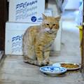 写真: 2012年01月18日の茶トラのボクチン(7歳)