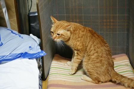 2010年01月28日の茶トラのボクチン(5歳)