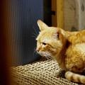 写真: 2010年02月15日の茶トラのボクチン(5歳)