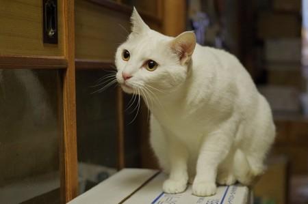 2017年12月11日のシロちゃん(メス4歳)