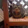 写真: 2018年1月17日にもやってきた迷い猫