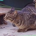 2018年1月20日の迷い猫パンチ君