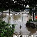 Photos: 池になった公園