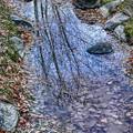 鴨々川の落ち葉