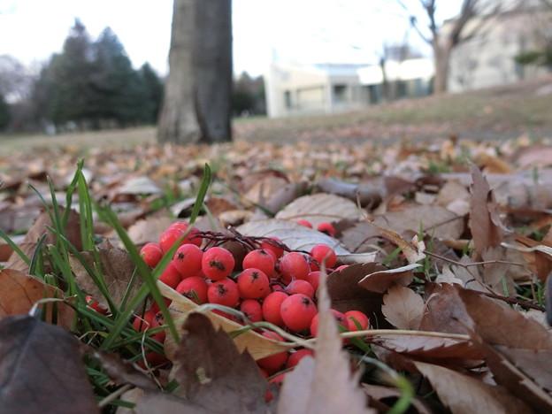 写真: 落ち葉・赤と緑にホッとする