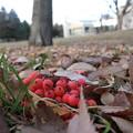 落ち葉・赤と緑にホッとする