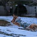 写真: 2015年・飛躍犬