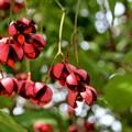 写真: 秋の赤い実が弾けて~♪