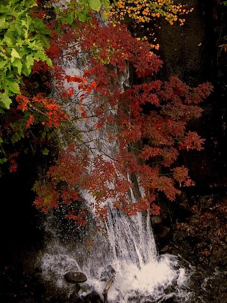 写真: 秋の水飛沫~♪