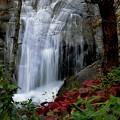写真: 秋・白扇の流れ~♪
