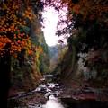 写真: 晩秋の弘文洞跡