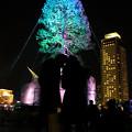 Photos: 世界一のクリスマスツリー11