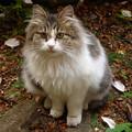 庭に佇む仔猫(2)