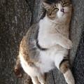 招き猫?踊る猫?