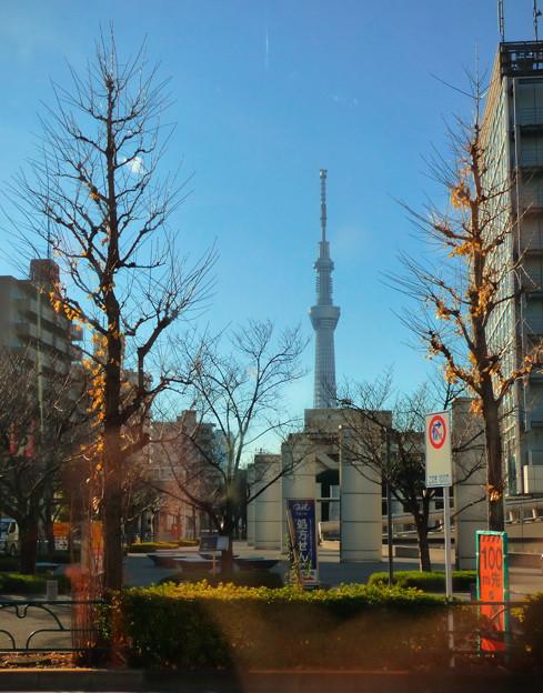 Photos: 「空の木」も、さすがに遠近法では…(^_^;)