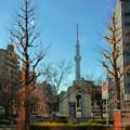「空の木」も、さすがに遠近法では…(^_^;)