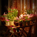 写真: 週末夜の花屋さん