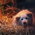 写真: ワンコの巣(1)