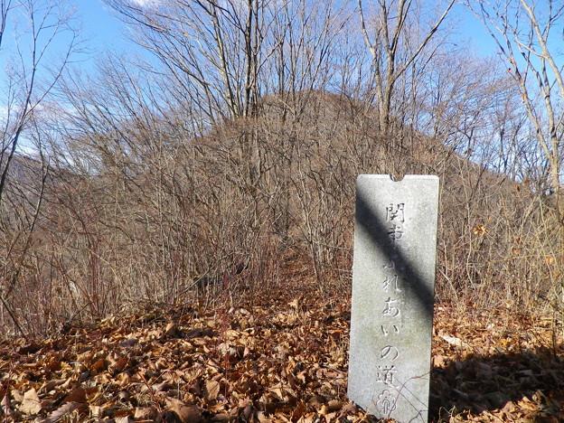 IMGP4582 樹の背後は榛名富士