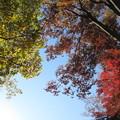 Photos: 黄葉&紅葉