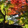 写真: カフェ&紅葉