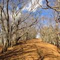 写真: 冬枯れの山道