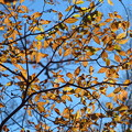 写真: 初冬