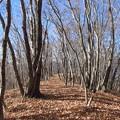 写真: 冬晴れの尾根道