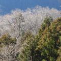 写真: 山の木々