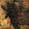 Photos: 秋の鳴子峡♪