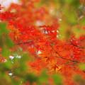 写真: 紅葉2 2014.11.24