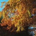 写真: 紅葉 2014.11.15