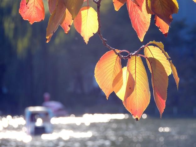 Photos: 晩秋の不忍池