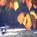 晩秋の不忍池