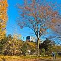 落葉の公園