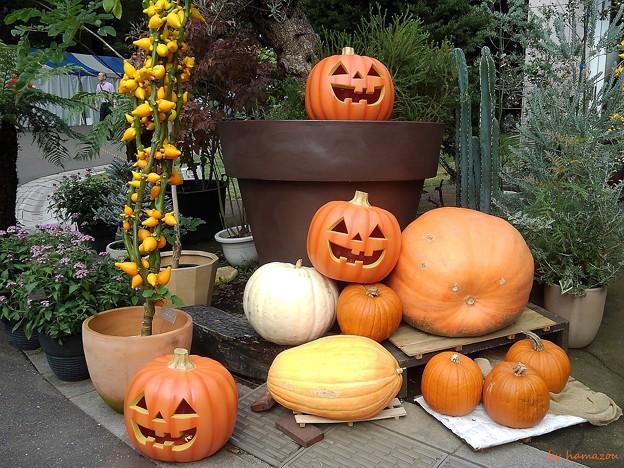 日比谷のかぼちゃ