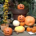写真: 日比谷のかぼちゃ