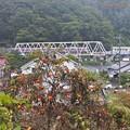 写真: 秋色沿線(3)
