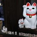 写真: 招福猫児(3)