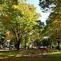 写真: 秋色に染まる頃