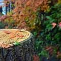 写真: 紅葉散歩