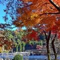 写真: 秋色に包まれて